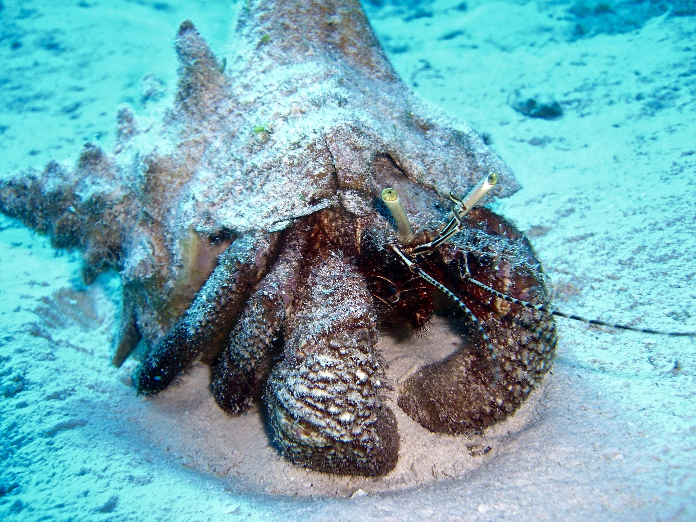 vida marina de isla cozumel