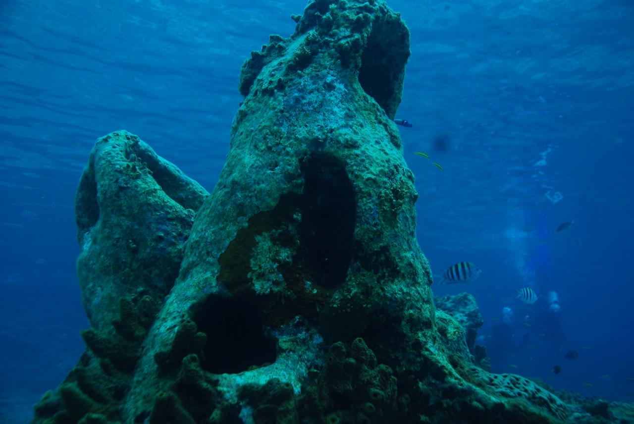 marine formations in cozumel