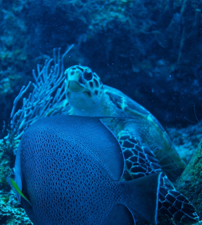 Sea-turtle-Mexico
