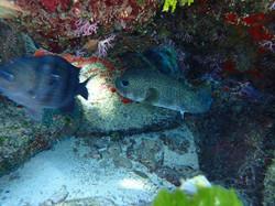 vida marina house reef