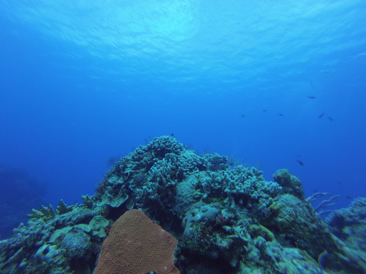 coral-reef-formations