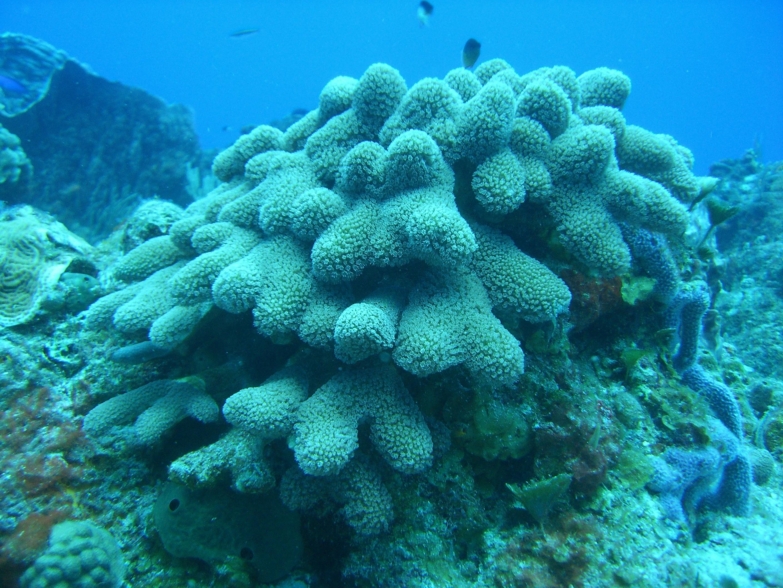 paraiso reef