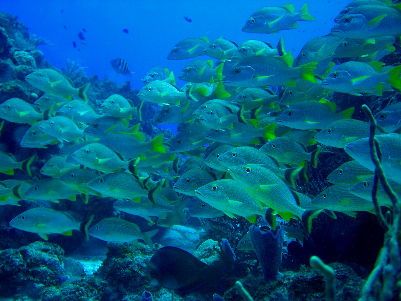 arrecifes cozumel