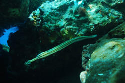 marine life in cozumel