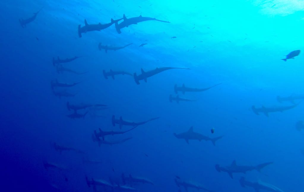 Diving Socorro Islands