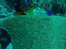 palancar gardens reef