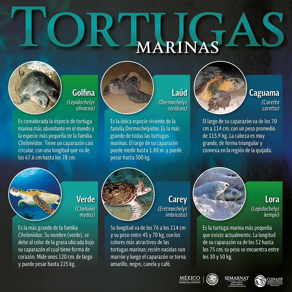 Proteccion-a-tortuga-marina