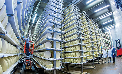 inside a cheese plant