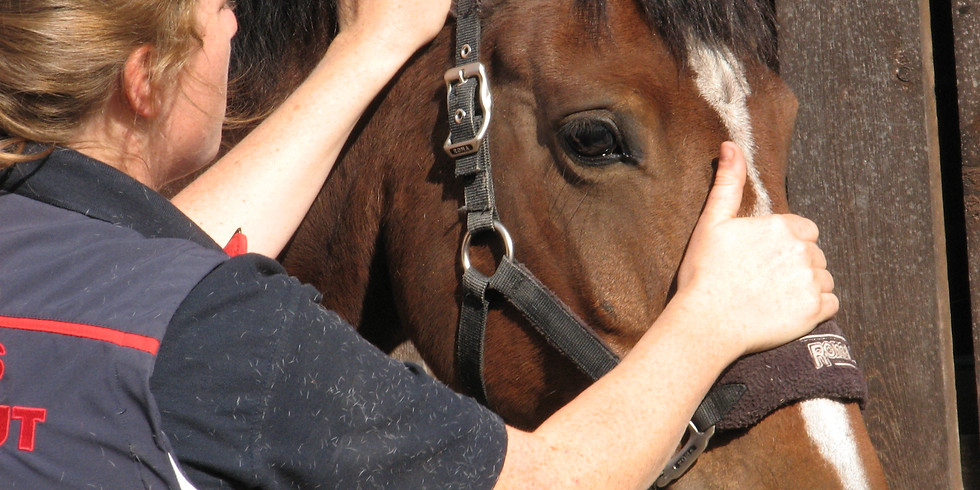 Equine Therapist CPD: Musculoskeletal Testing and Joint Mobilisations