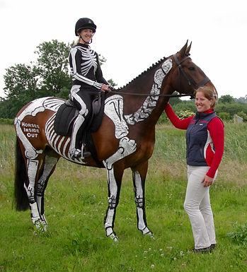 Gillian HIggins, skeleton horse and rider, anatomy and biomechanics