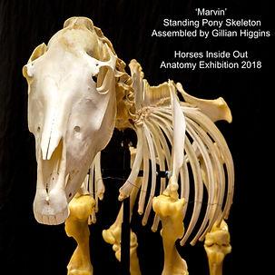 horse skeleton sculpture, anatomy artist