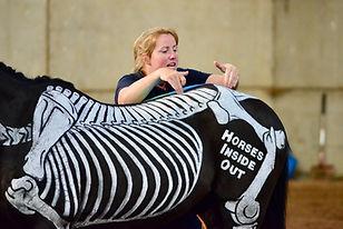 Assessing posture, horse back posture, webinar lumbosacral, sacroiliac, ribs, horse riding, training,
