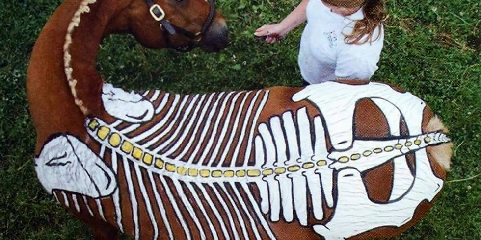 Understanding the Horse's Back with Gillian Higgins