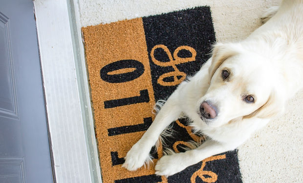 A white labrador sitting on a doormat looking up at the camera