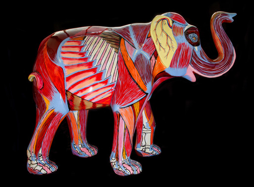 Anatomically Painted Animals for Charity