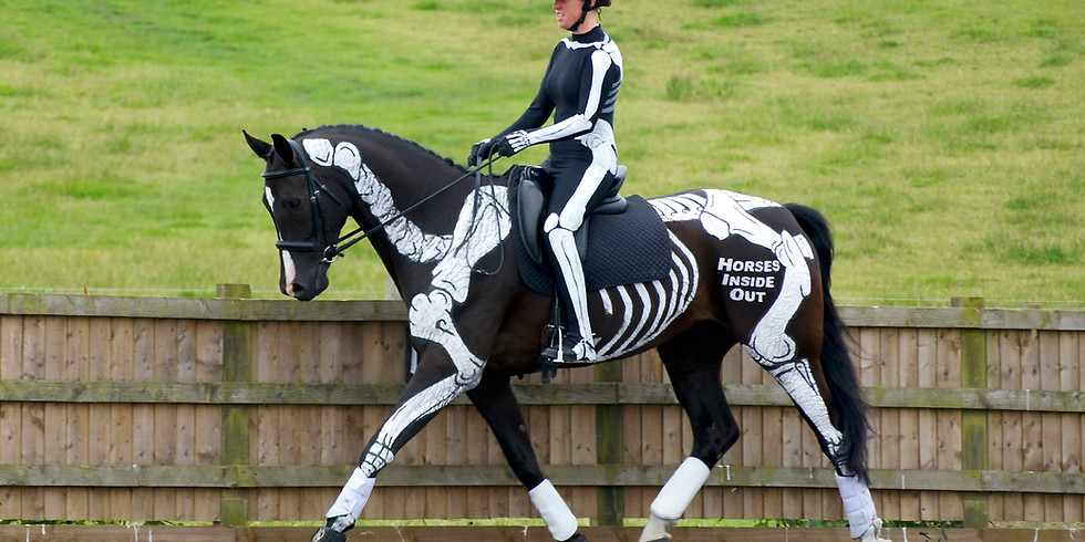 Dressage Dissected