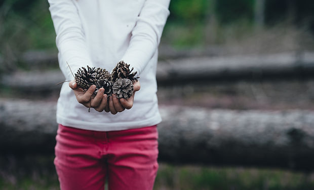 A closeup of a child holding a handful of Pinecones in a Forest