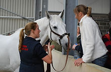 Horses Inside Out academy, online videos, webinars, online lectures, video courses, tutorials, CPD, education, anatomy, biomechanics, therapy, rehabilitation, exercise, therapy, pilates, polework, back, sacroiliac, spine horse and rider, equine