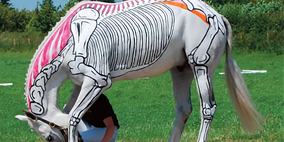 Assessing and Improving Your Horse's Posture