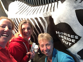 Get involved by volunteering at a horses inside out lecture demonstration, ride, help paint horses with skeleton and muscles or ride