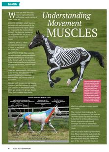 Understanding Movement Muscles