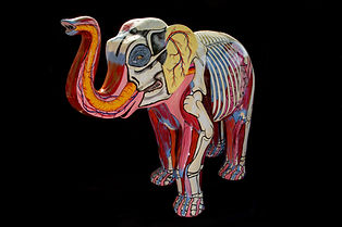 Anatomical painting on an elephant for charity by Gillian Higgins in support of the The Children's Hospital Trust