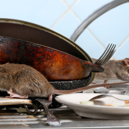 Things Every Homeowner Can Do To Prevent Rodents