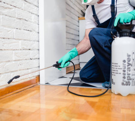 When Is The Best Season To Spray Your Home For Rodents?