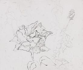 Gro Finne / Ny blomst / sukkerakvatint / 80 x 60 / kr 4.000