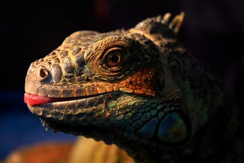 Cheeky Dinosaur