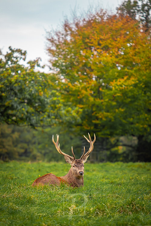 Low Stag