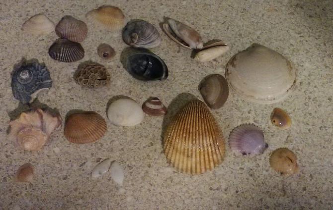 What Rocks in Charleston, SC?