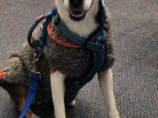 Therapy Dog!!