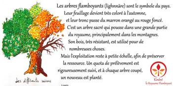 Les arbres flamboyants