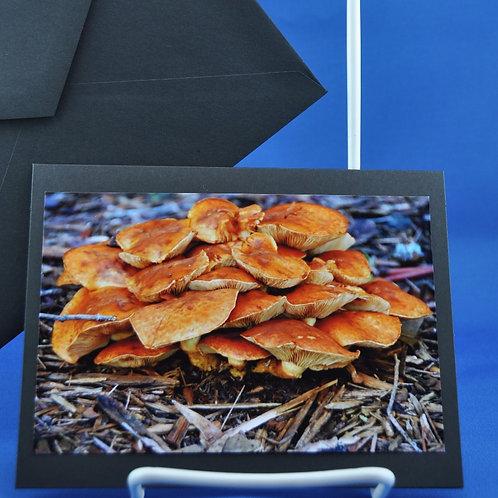 Mushrooms anyone?