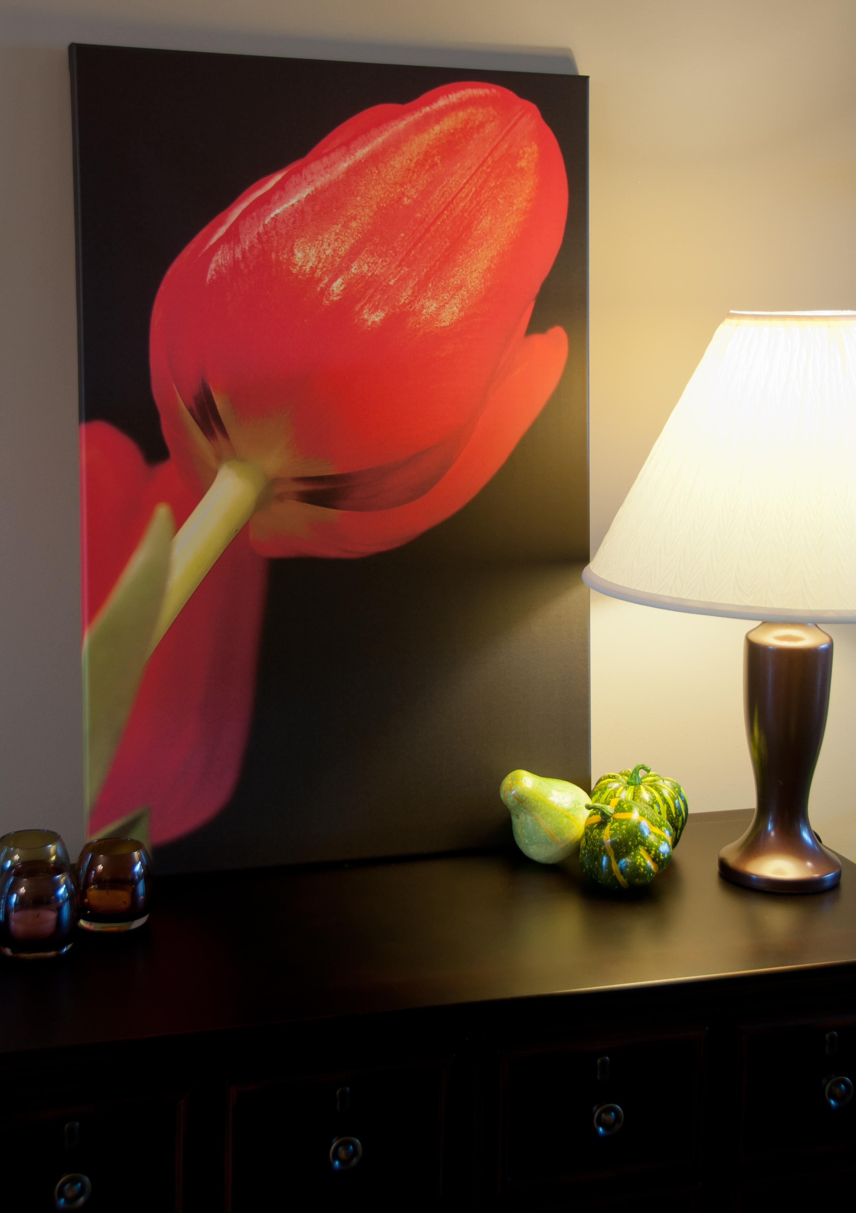Red Tulip Canvas