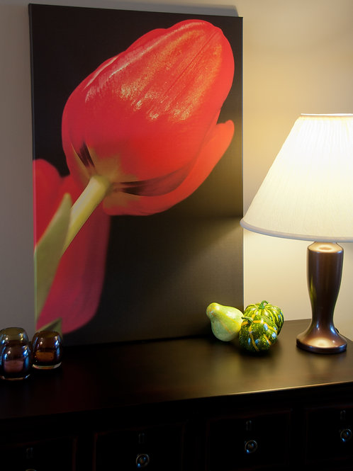 Red Tulip on black Canvas Art Print