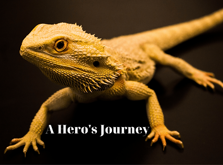 A Hero's Journey-min.png