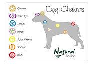 Chakra Chart - Dog (A4).jpg