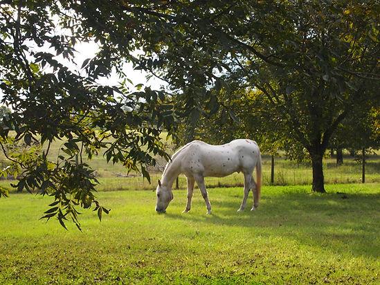 A senior horse enjoying his Golden Years.