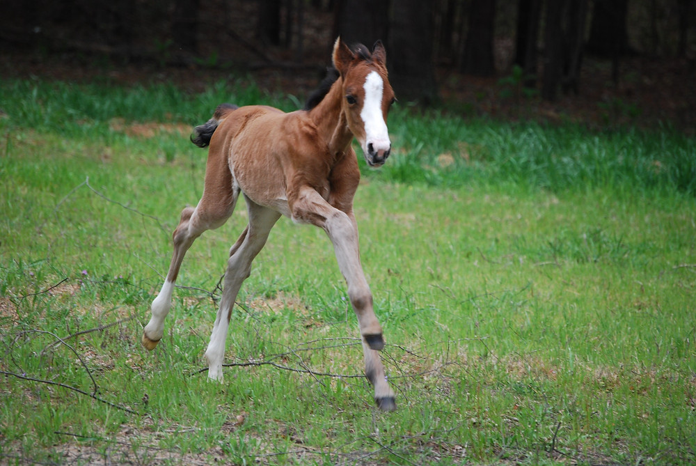 This filly has big dreams of being a race horse!
