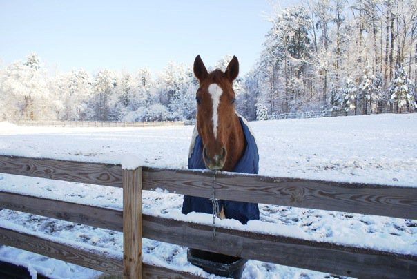 Shelter for your horse is important in the winter. If it is cold, wet and windy a good run in shed, stall or turnout blanket will help keep him warm.