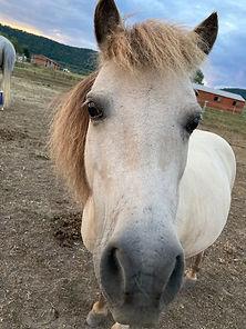 Olivia Adams Ponies.jpg