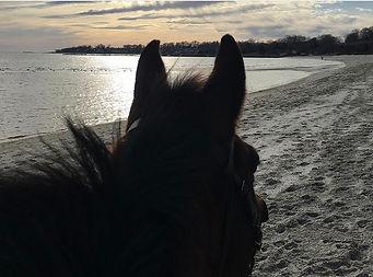 Olivia Adams Beach Bums.jpg