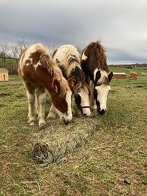 Olivia Adams Foals.jpg