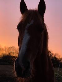 sunset gabby herman.jpg