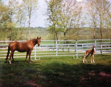 Amy Blakeslee Foals.jpg