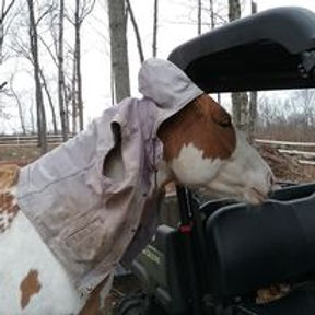 That's not for horses.jpg