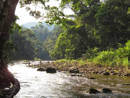 What to do in Tarapoto in 1 day