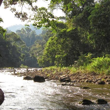 Qué hacer en Tarapoto en un día